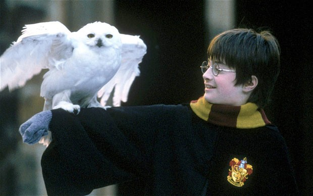 """Harry Potter: """"Oh Hedwig, at least you will be by my side for the entire series."""""""